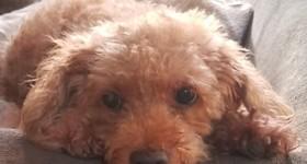 動物も大事な家族   愛犬の寝相でわかる性格診断